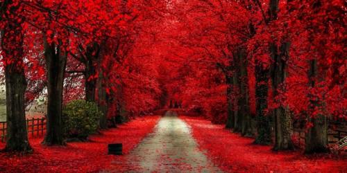Autumn Bloody by DominikMarciszewski