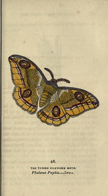 jomobimo:  48. Silkworm Moth, The Book of Butterflies, Sphinxes and Moths, 1832-34