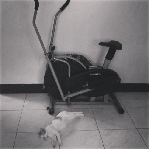 Exercise is tiring might as well sleep.