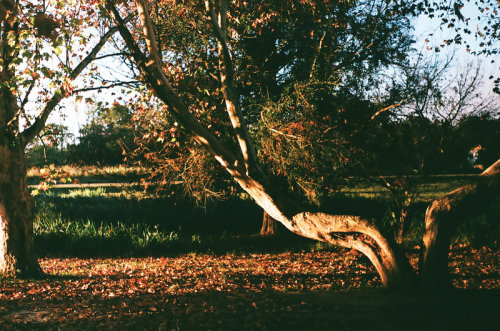 tristepinheiro:  Where the old tree bends by ~Flavslav (Own)Autumn, 2013.