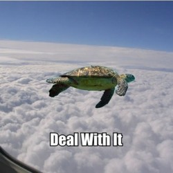 9gag:  Flying turtle..