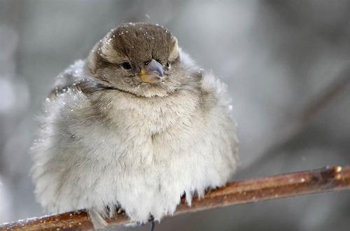 pagewoman:  Cold Sparrow.by Gleb Garanich.