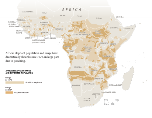 Before/After - Map shows shrinking range and dwindling populations of elephants in Africa. All eyes are on China, which is fueling the illegal slaughter of thousands of elephants for their tusks.  VANISHING ELEPHANTS  Killing African elephants for their ivory is devastating a species that's already losing ground to a growing human population. Via