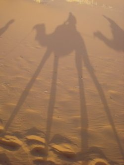 Desert Long Shadows