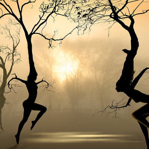 themystic50:  Dancing Trees