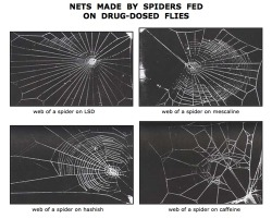 morksuggan:  Nets made by spiders fed on drug-dosed flies.