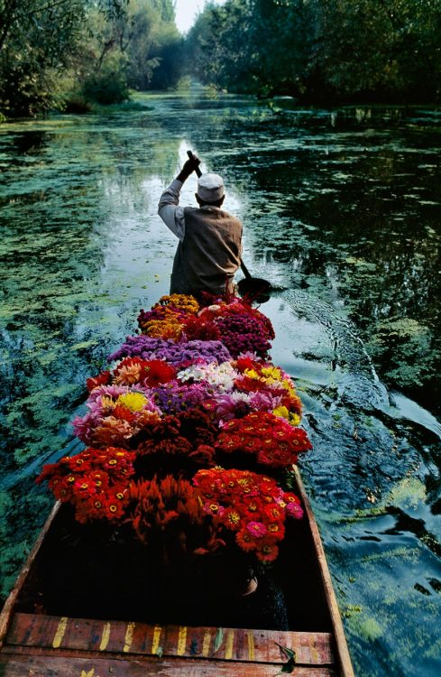 "urbanfragment:  Flower Seller on the Dal Lake in Srinagar, Kashmir, 1996. Photo by Steve McCurry. ""Good pictures take time and work. When visiting Lake Dal in 1996, McCurry travelled with the local flower sellers as they journeyed down the river. For two weeks he would ride with the merchants during the morning. On this day the vibrant flowers and boatman, arm raised in mid-paddle, combine with the morning light to create the perfect composition."""