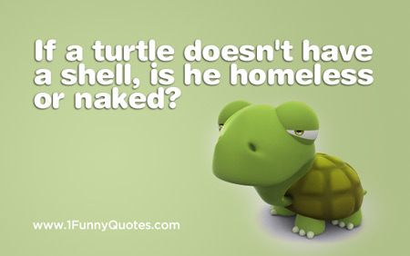 "1funnyquotes:   ""If a turtle doesn't have a shell, is he homeless or naked?"""