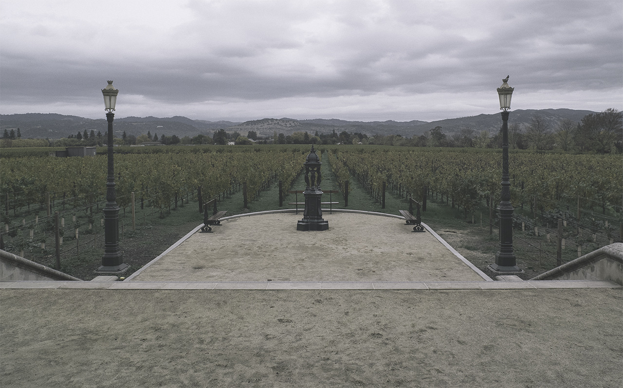 dark rows (napa valley)