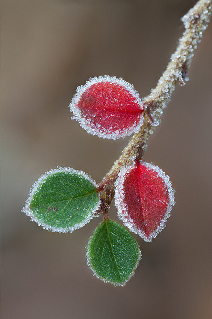 A touch of frost {EXPLORED 09.12.2012} by smir_001 catching up on Flickr.
