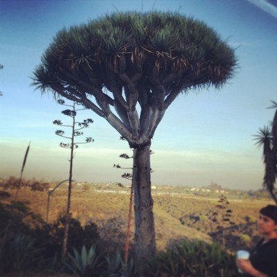 Super Dr. Seuss tree, part 2 (at Desert Garden)