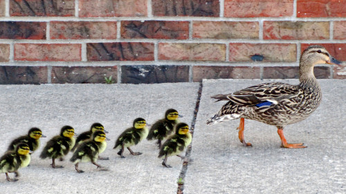 """The first thing I remember learning from my mother was 'Be like a duck: Calm on the surface but paddling like hell underneath.' She used to keep this on our fridge along with another slogan that said, 'Don't get mad, get even; live long enough to be a problem to your kids.'"" Happy Mother's Day! Advice from the moms of today's successful business leaders"