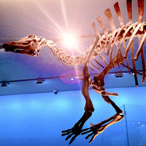 Ouranosaurus, the southern and spined hadrosaur! Learn MORE about this special guy HERE! #ultimatedinos CLOSES March 17th!