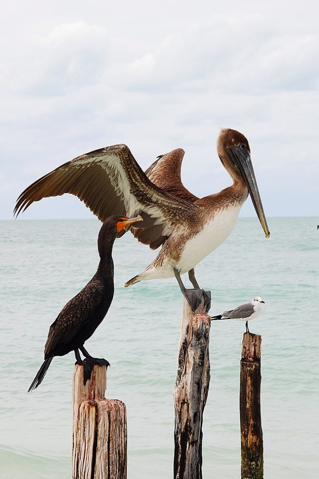Photo of the Day: Birds of Holbox Photo by: Karla Utting (Miami Beach, FL); Holbox, Mexico.