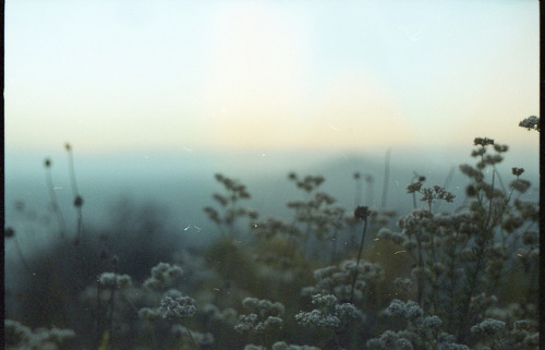 orbitae:  Mt. Helix - 35mm expired film by dakotabrinkert on Flickr.