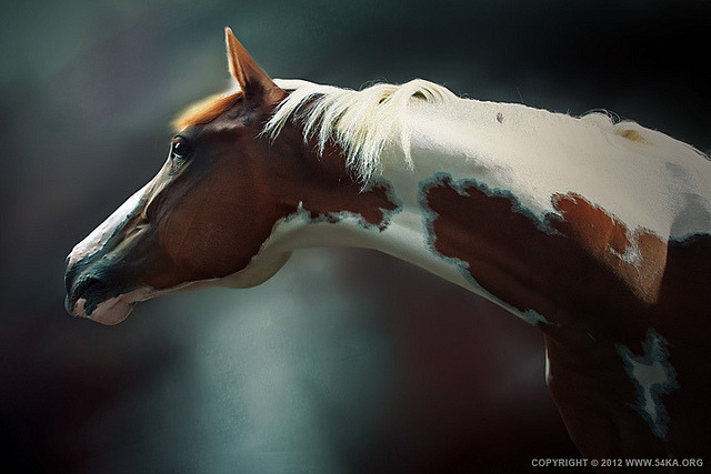 Horse Portrait by 54ka on Flickr.