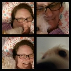 Milo Puppy Love Attack #Puppy #love #Rescue #sweet #sloppykisser #kisses #bestfriend #nofilter #lazy #afternoon