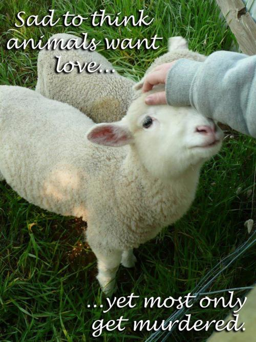 veganmovement2012:  Sad to think animals want love