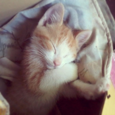 hannah-christensen:  Too much cuteness. :) #baby #kitten