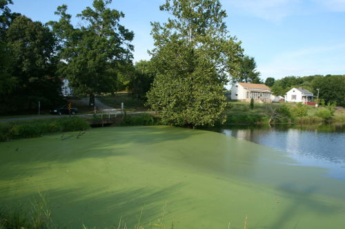 U.S Can Grow Copious Amounts of Pond Scum for FuelA new analysis shows that the nation's land and water resources could likely support the growth of enough algae to produce up to 25 billion gallons of algae-based fuel a year, one-twelfth of the country's yearly needs.The findings come from an in-depth look at the water resources that would be needed to grow significant amounts of algae in large, specially built shallow ponds. The results were published in Environmental Science and Technology.Read more: http://www.laboratoryequipment.com/news/2013/05/us-can-grow-copious-amounts-pond-scum-fuel
