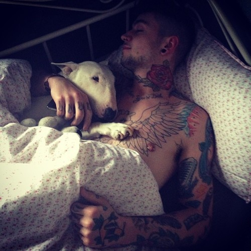 Scruff + Bull Terrier + Tattoos = supercuteness
