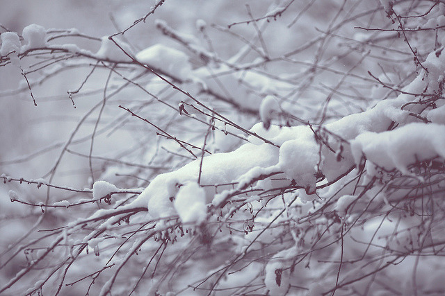 joanne-montgomery:  Winter by Sandra liveitdown on Flickr.
