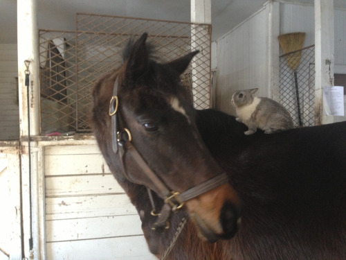 sickfrick:  Gracie gives spike a pony ride!!!