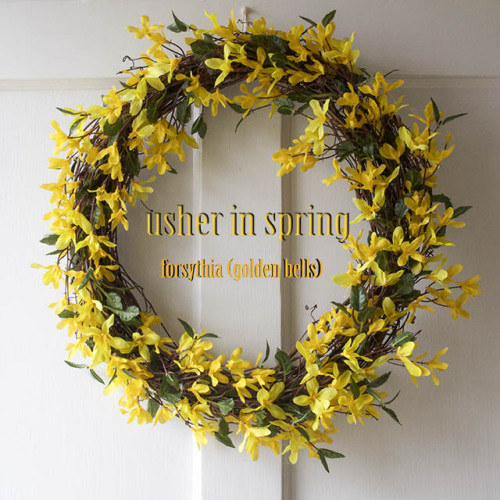 Make this cute forsythia wreath for $10 in 15 minutes