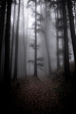 unwrittennature:  Out in the Woods by: Kathrin Loges und Jan Wunderlich
