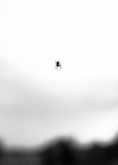 timothybriner:  Spider (1), 2012