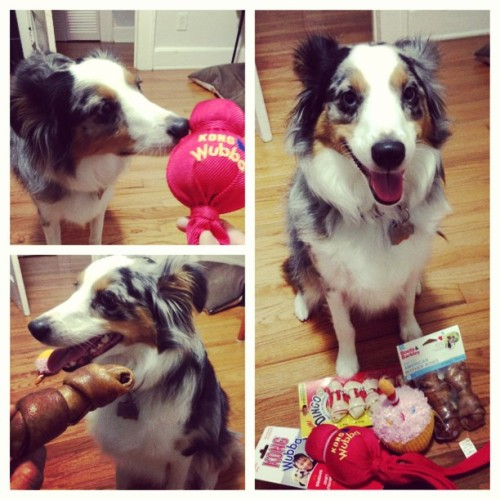 #hbd to the #spoiled #little #brat. #riot. #new #toys and #bones. 🍗🍖👾🐾🐶🎈🍀👾🍰😒 (at The AlyKat)