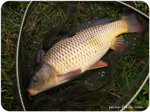 Method Feeder Fishing Carp