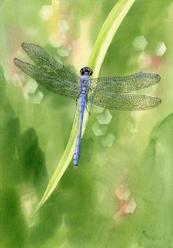 beautymothernature:  Beautiful Blue Dragonfly Love Moments