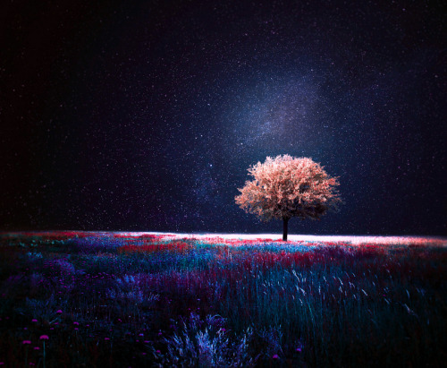 mssaramaria:  night by *kokoszkaa