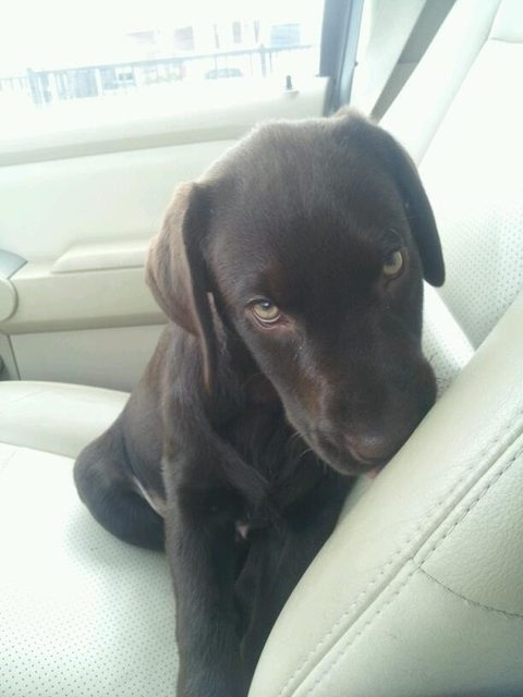 Shy puppy in car
