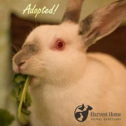 Congrats to Nia the Rabbit: This little lady was adopted today!