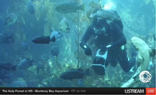 What animals can you identify in our new live HD Kelp Cam? (Now including multiple views!) Let us know in the comments!  View the cam. Answers here!
