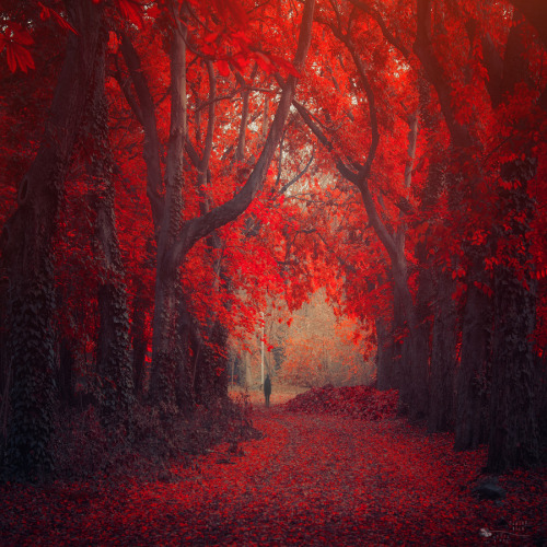 Stand and Wait by Ildiko Neer