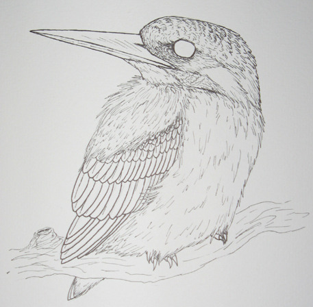 claramferreira:  Really old illustration of a Common Kingfisher (Alcedo atthis). I'm pretty sure I started to colour this with watercolours and colour pencils, but I can't find it.