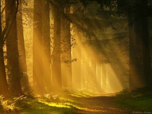 Sun Ray Forest, The Netherlands photo via george