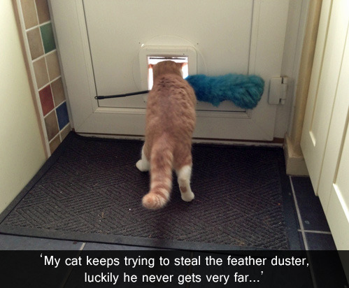 tastefullyoffensive:  [via]   Lol my cat trys to run away with a rubber band