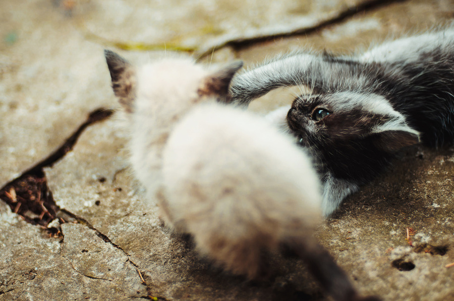 photogenicfelines:  (Bohdan Bobak)