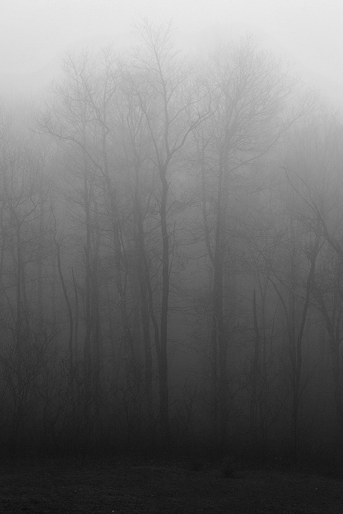 ryanmurph:  [124/365] Eerie and dreary (by ryotnlpm)
