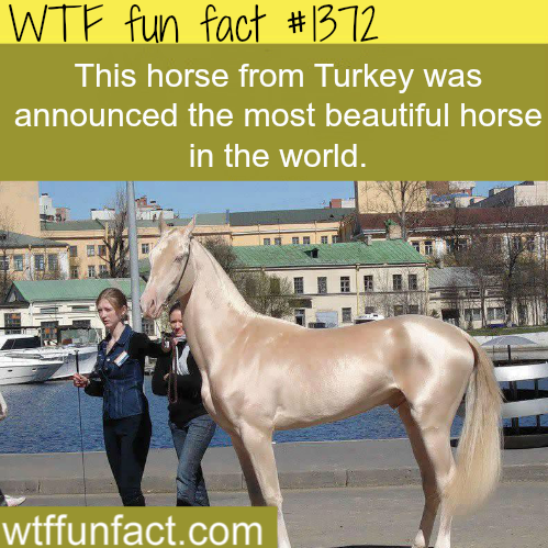wtf-fun-factss:  pictures of the most beautiful horse in the world animals facts / wtf fun facts  This photo was loading and I legit thought it was gonna be a photo of sarah jessica parker
