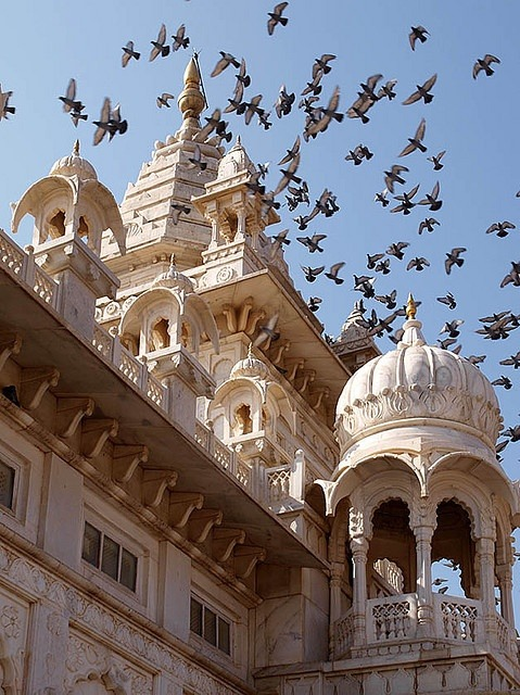 Pigeons above Jaswant Thada Palace in Jodhpur, India :-  cultureholidays.com
