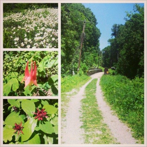 Guild Trail Walk Part 2 with @joeclarkc #hiking (at Guild Trailhead)