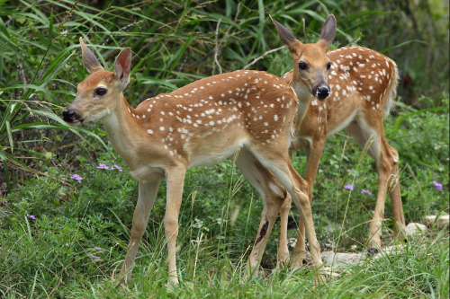 risqkue:  bambi and his mother
