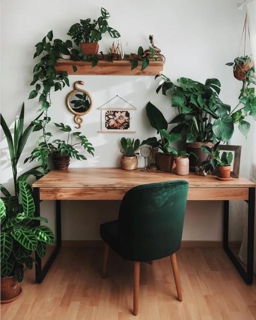 #plants#interiors