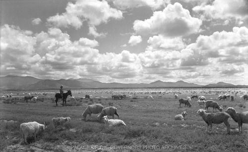 Sheep Herd New Mexico - ca 1935 Photo By: T. Harmon Parkhurst Negative #022684