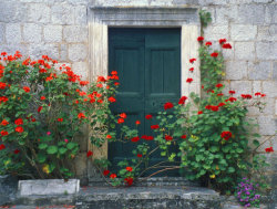 Door and Roses, Perast, Montenegro. By Dstaples photography